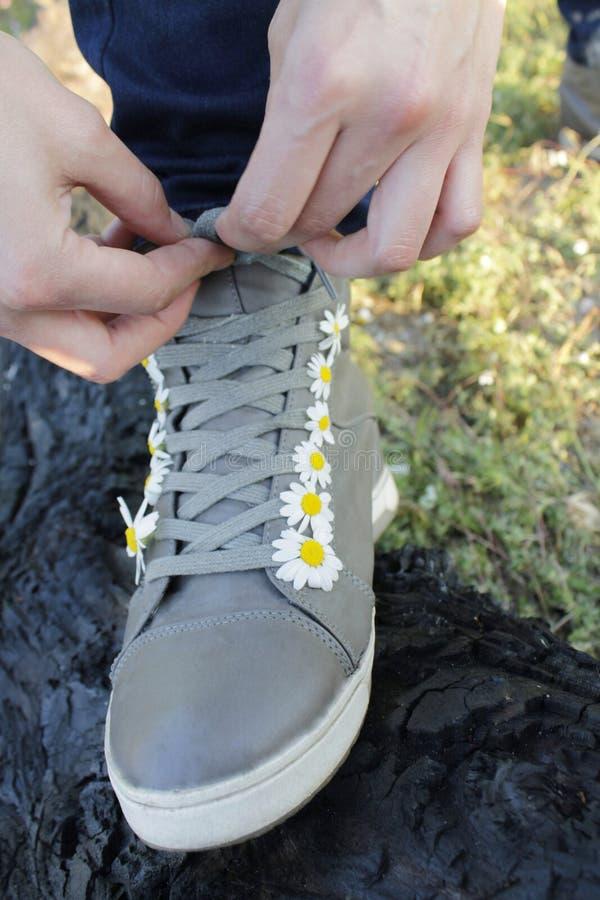 Πάνινα παπούτσια στις μαργαρίτες στοκ εικόνες με δικαίωμα ελεύθερης χρήσης