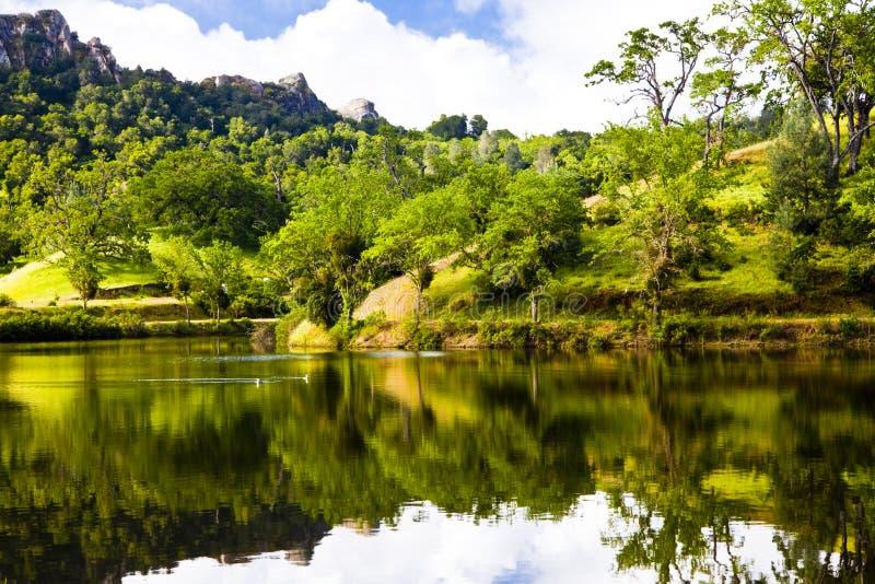 Πάπιες λιμνών Santa Margarita στοκ εικόνα με δικαίωμα ελεύθερης χρήσης
