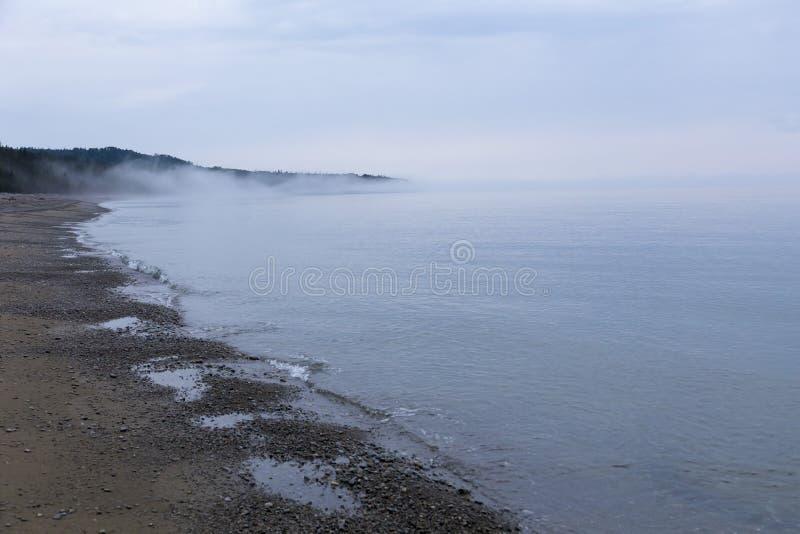 Πάπιες που κολυμπούν στα νερά Κόλπων του ST Lawrence δίπλα στην ακτή στοκ φωτογραφίες