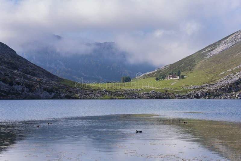 Πάπιες στις λίμνες της Covadonga στοκ φωτογραφία με δικαίωμα ελεύθερης χρήσης