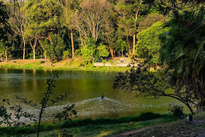 Πάρκο εγκλιματισμού στην κολύμβηση παπιών του Σάο Πάολο Βραζιλία στοκ εικόνες με δικαίωμα ελεύθερης χρήσης