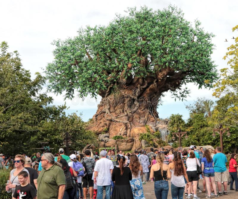 Πάρκο ζωικών βασίλειων, κόσμος Walt Disney, Ορλάντο, Φλώριδα στοκ φωτογραφία με δικαίωμα ελεύθερης χρήσης