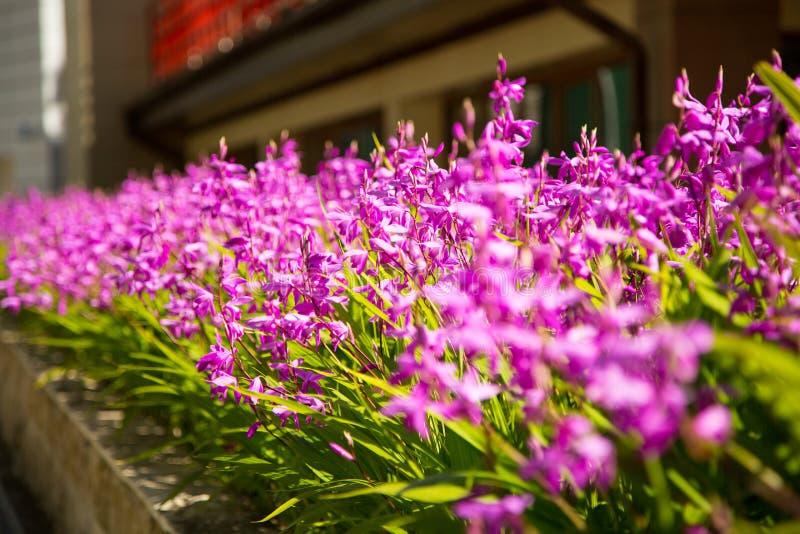 Πάρκο λουλουδιών στο κέντρο του Γκρόζνυ στοκ φωτογραφία