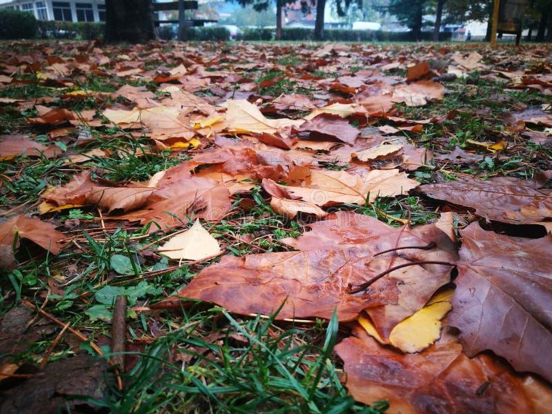 Πάρκο με τα φύλλα στοκ φωτογραφία