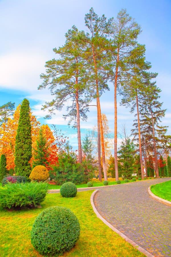 Πάρκο με τα ψηλά πεύκα στοκ εικόνες