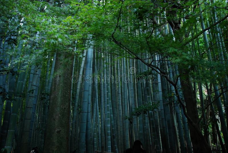 Πάρκο μπαμπού στοκ εικόνα