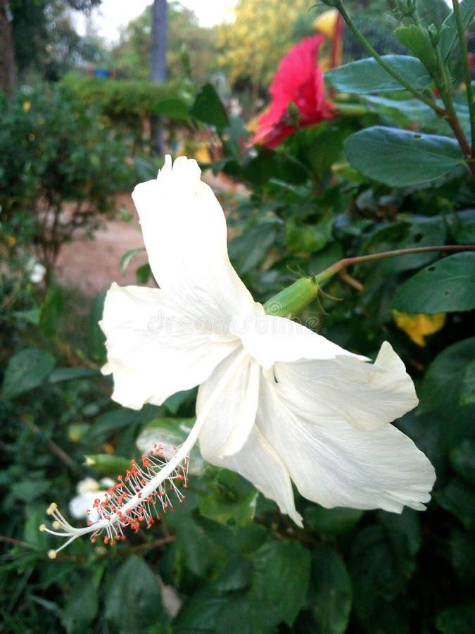 Πάρκο λουλουδιών @ στοκ εικόνα με δικαίωμα ελεύθερης χρήσης