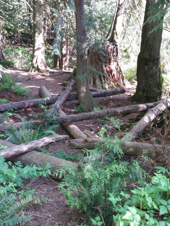 Πάρκο πτώσεων Snoqualmie στοκ εικόνες με δικαίωμα ελεύθερης χρήσης
