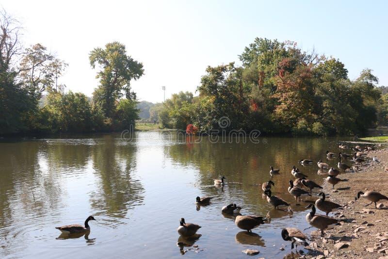 Πάρκο ρυακιών κλάδων στοκ εικόνα με δικαίωμα ελεύθερης χρήσης