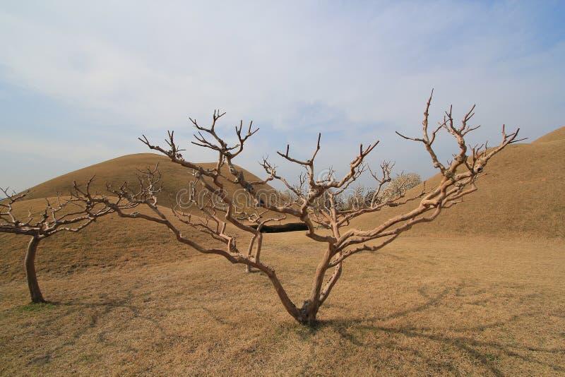 Πάρκο τάφων στη Νότια Κορέα στοκ φωτογραφίες με δικαίωμα ελεύθερης χρήσης