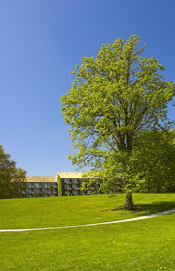 πάρκο της Δανίας πανεπιστ&et στοκ φωτογραφία με δικαίωμα ελεύθερης χρήσης