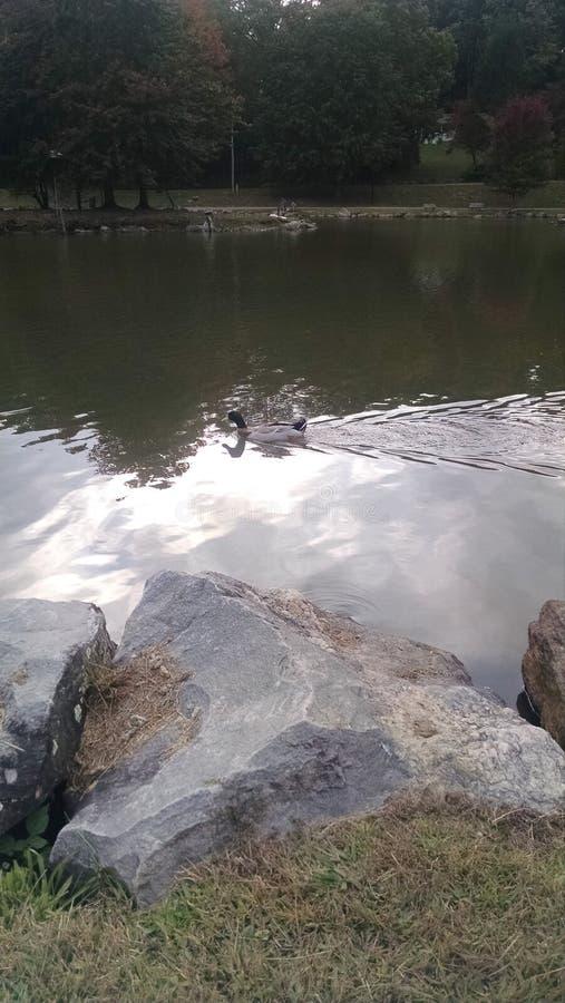 Πάρκο τομαχόκ Laje στοκ εικόνες