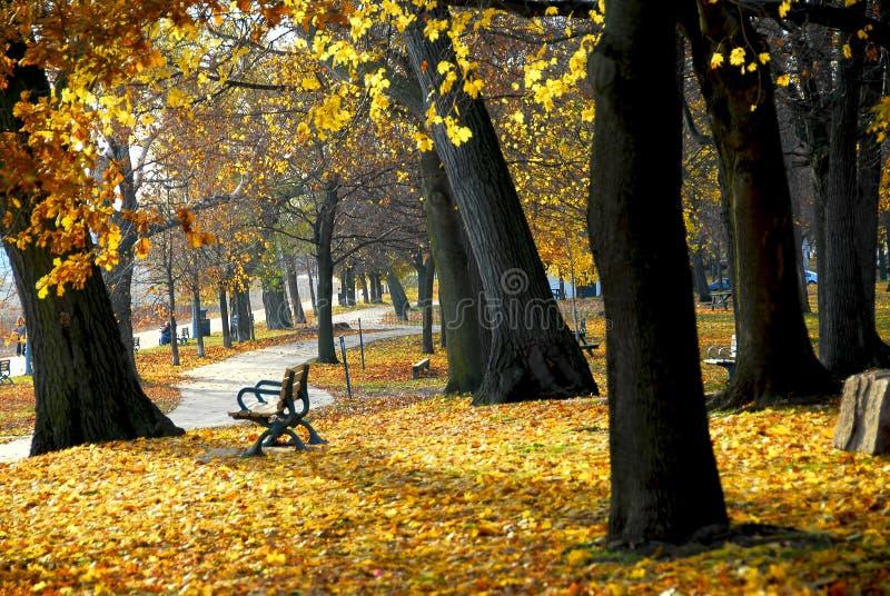 Download πάρκο φθινοπώρου στοκ εικόνα. εικόνα από αναψυχή, υπαίθρια - 1532017