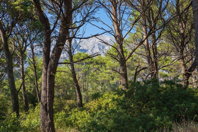 Πάρκο φύσης βουνών Biokovo και δέντρα από Makarska Riviera, Δαλματία στοκ φωτογραφίες με δικαίωμα ελεύθερης χρήσης