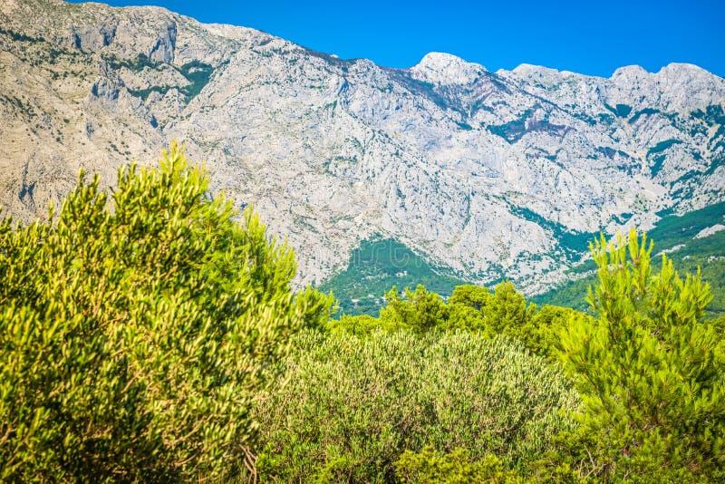 Πάρκο φύσης βουνών Biokovo και δέντρα από Makarska Riviera, Δαλματία στοκ φωτογραφία