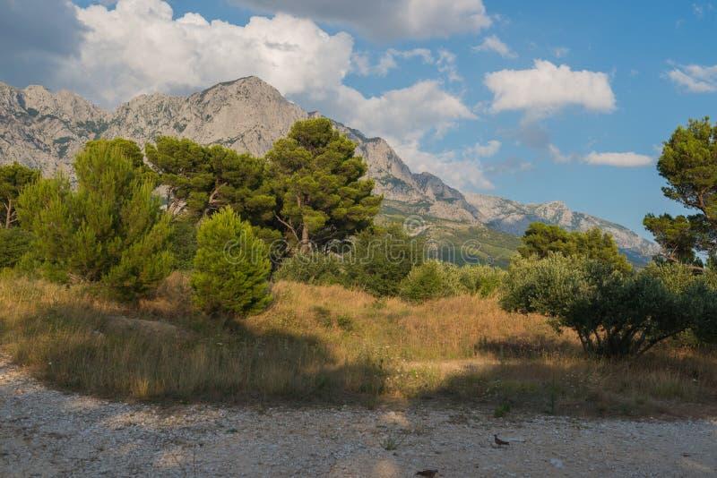 Πάρκο φύσης βουνών Biokovo και δέντρα από Makarska Riviera, Δαλματία στοκ εικόνα με δικαίωμα ελεύθερης χρήσης