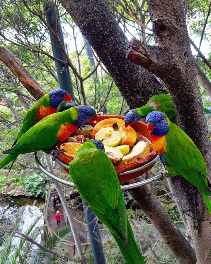Πάρκο Loro στοκ εικόνα με δικαίωμα ελεύθερης χρήσης