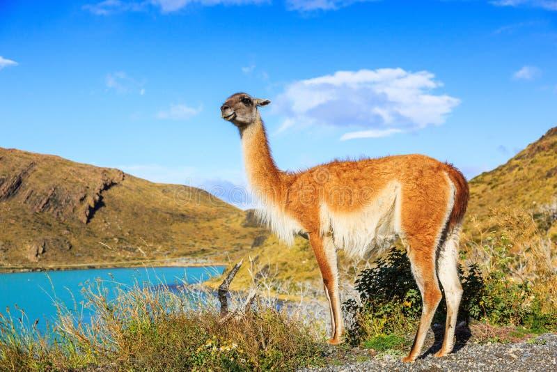 πάρκο paine της Χιλής del εθνικό torres στοκ φωτογραφίες