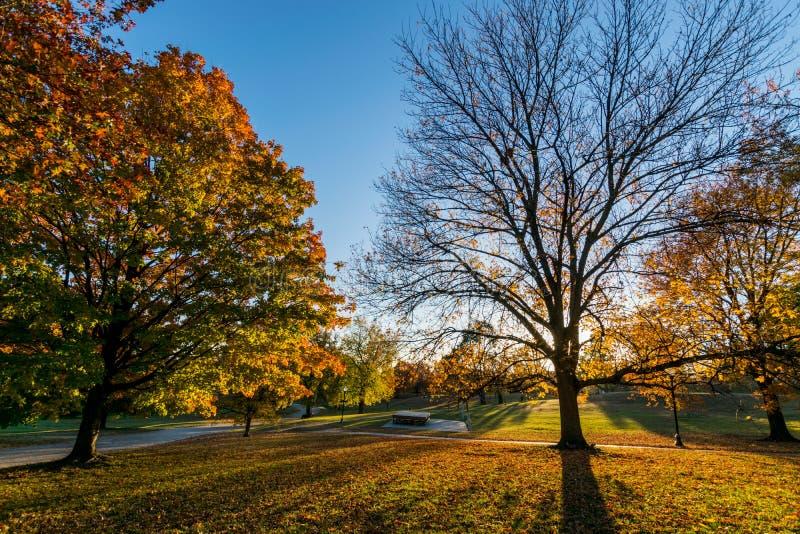 Πάρκο Patterson κατά τη διάρκεια του φθινοπώρου στη Βαλτιμόρη, Μέρυλαντ στοκ εικόνα με δικαίωμα ελεύθερης χρήσης