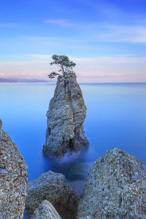 Πάρκο Portofino. Απότομος βράχος βράχου δέντρων πεύκων. Μακροχρόνια έκθεση. Λιγυρία, Ιταλία στοκ εικόνες