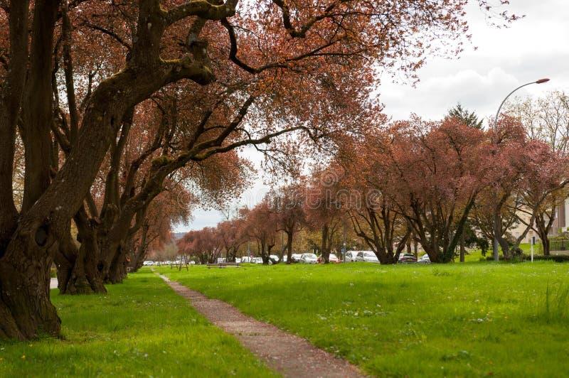 Πάρκο Remich στοκ φωτογραφίες με δικαίωμα ελεύθερης χρήσης