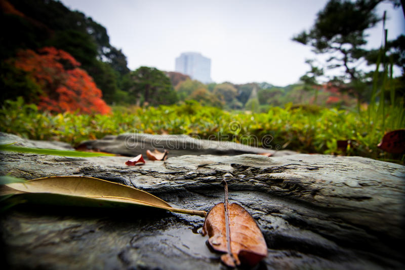 Πάρκο Rikugien το φθινόπωρο στοκ εικόνες με δικαίωμα ελεύθερης χρήσης