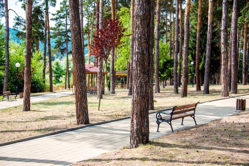 Πάροδος πάρκων σε ένα δημόσιο πάρκο πόλεων σε μια ηλιόλουστη θερινή ημέρα στοκ εικόνες