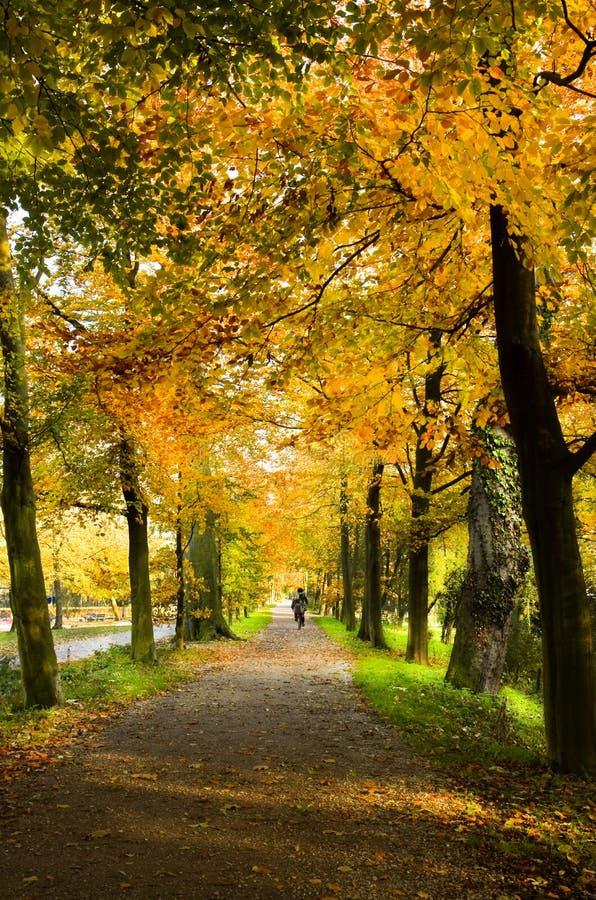 Πάροδος στο πάρκο με τα δέντρα οξιών στοκ φωτογραφίες