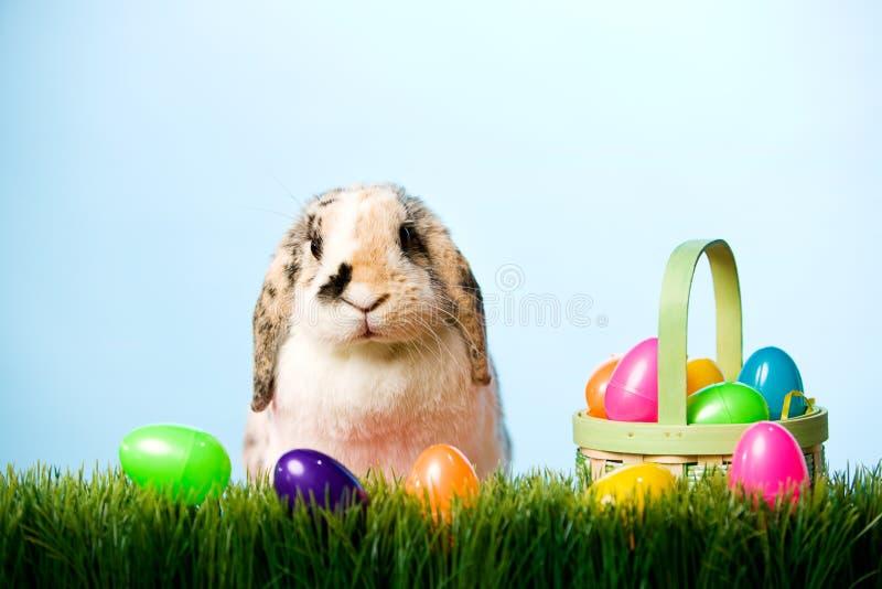 Πάσχα: Λαγουδάκι Πάσχας στη χλόη με το καλάθι των πλαστικών αυγών στοκ εικόνα