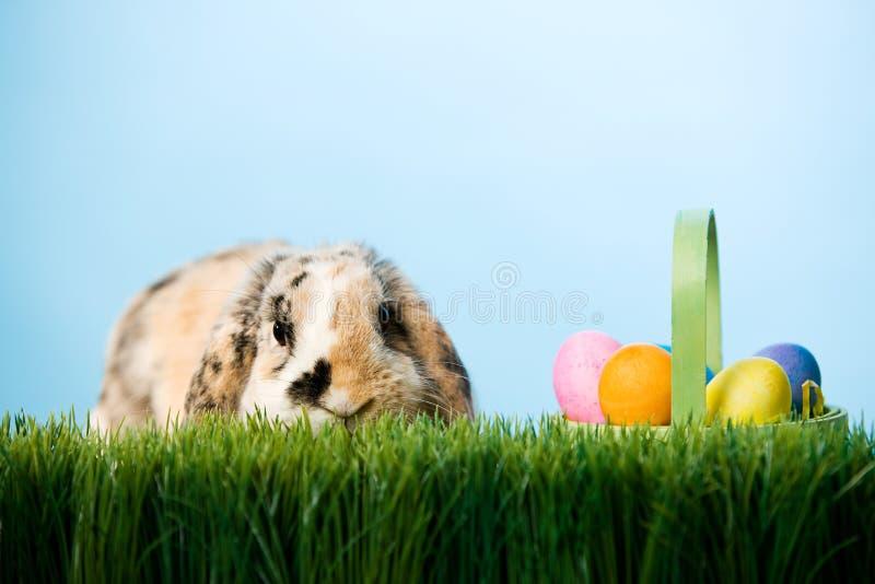 Πάσχα: Συνεδρίαση λαγουδάκι Πάσχας στη χλόη με το καλάθι των αυγών στοκ εικόνα με δικαίωμα ελεύθερης χρήσης