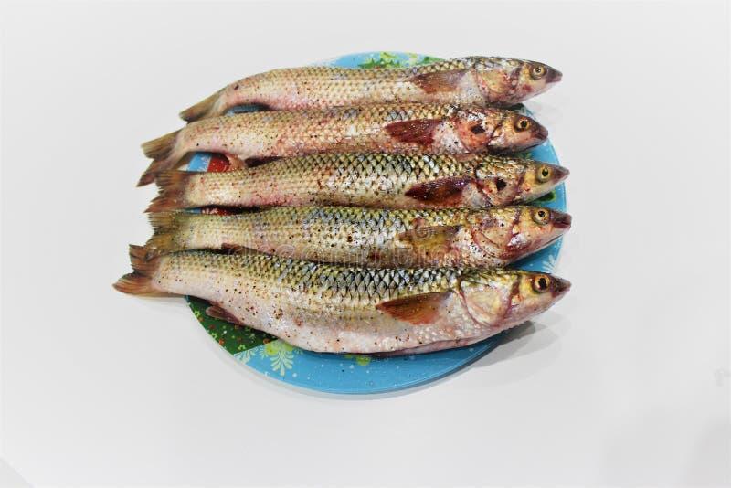 Πέντε εξεντερισμένοι κέφαλοι, που ψεκάζονται με το αλάτι και το πιπέρι Προετοιμασμένος για το τηγάνισμα για Πάσχα, σε ένα χρωματι στοκ φωτογραφίες με δικαίωμα ελεύθερης χρήσης