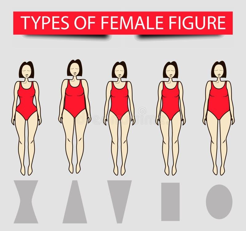 Πέντε τύποι θηλυκών αριθμών, διανυσματική εικόνα ελεύθερη απεικόνιση δικαιώματος