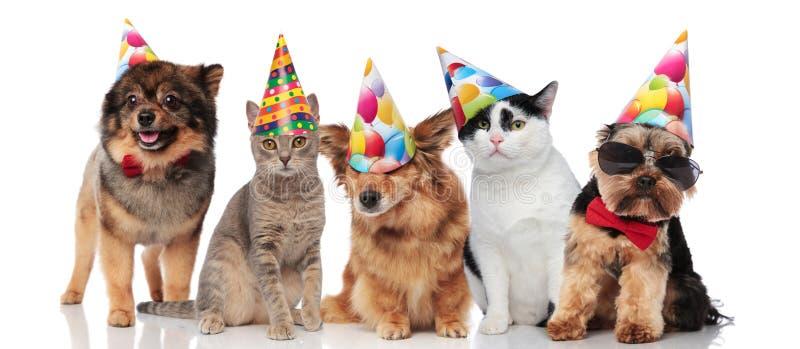 Πέντε χαριτωμένα κατοικίδια ζώα κομμάτων με τα ζωηρόχρωμα καλύμματα στοκ εικόνα με δικαίωμα ελεύθερης χρήσης