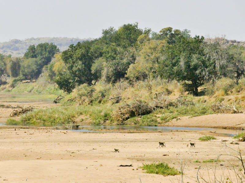 Πέρασμα ποταμών Limpopo το τοπίο ερήμων του έθνους Mapungubwe στοκ εικόνα