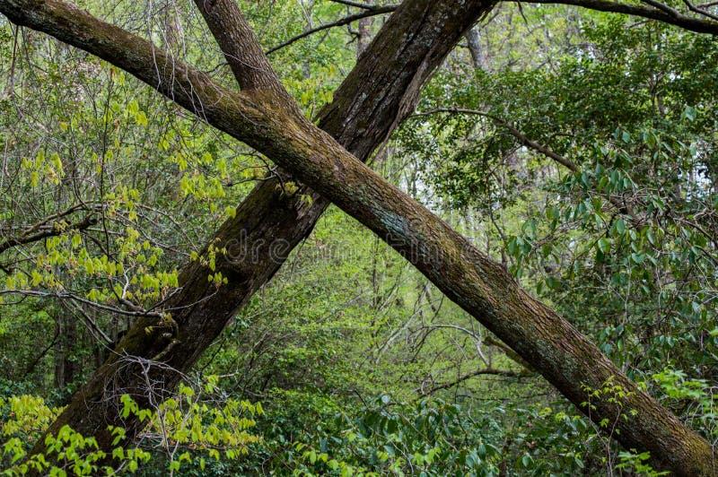 Πέρασμα των δέντρων στοκ εικόνες