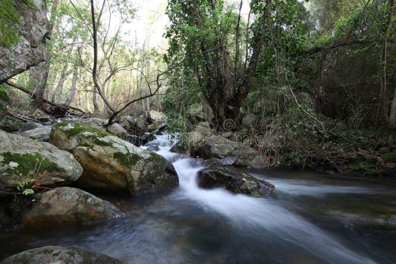 Πέρα από τον ποταμό στο βαθύ δάσος στοκ φωτογραφία με δικαίωμα ελεύθερης χρήσης