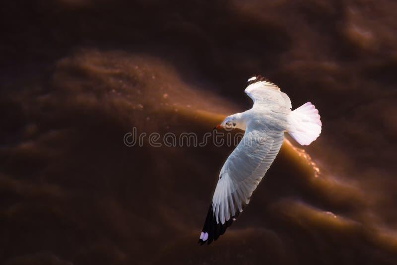 πέρα από seagull ποταμών στοκ εικόνα με δικαίωμα ελεύθερης χρήσης