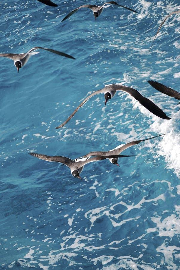 πέρα από seagulls θάλασσας στοκ φωτογραφίες