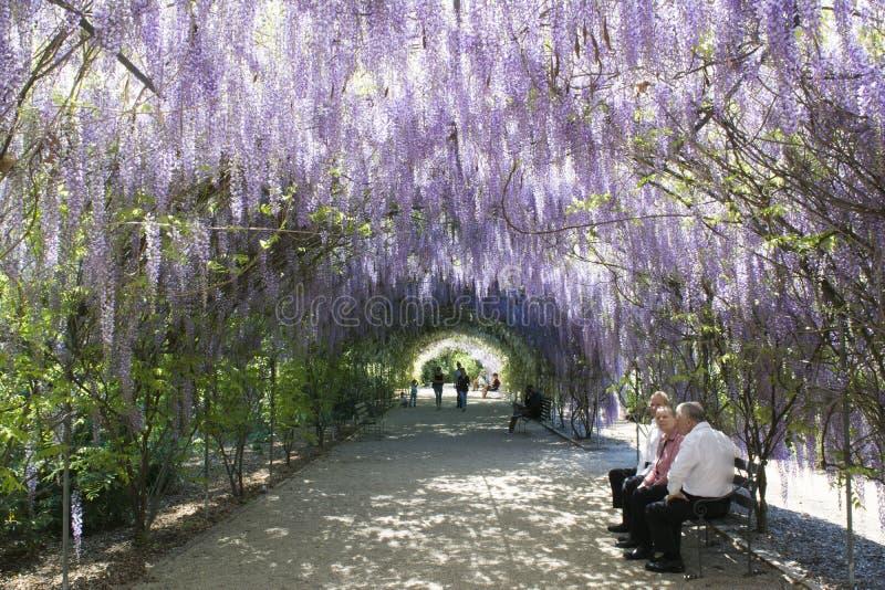 Πέργκολα Wisteria, βοτανικός κήπος της Αδελαΐδα, Νότια Αυστραλία στοκ εικόνες