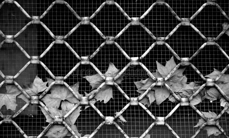 Πέρυσι φύλλα ` s στοκ φωτογραφία με δικαίωμα ελεύθερης χρήσης