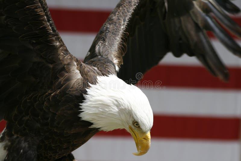 πέταγμα αετών στοκ φωτογραφίες με δικαίωμα ελεύθερης χρήσης