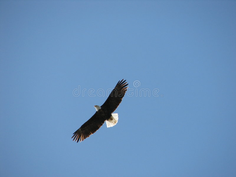 πέταγμα αετών στοκ φωτογραφίες