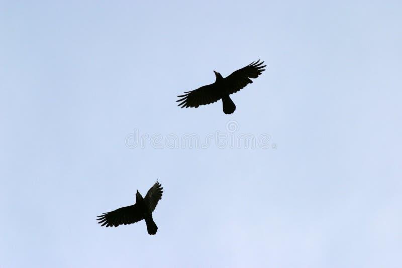 πέταγμα πουλιών στοκ φωτογραφία