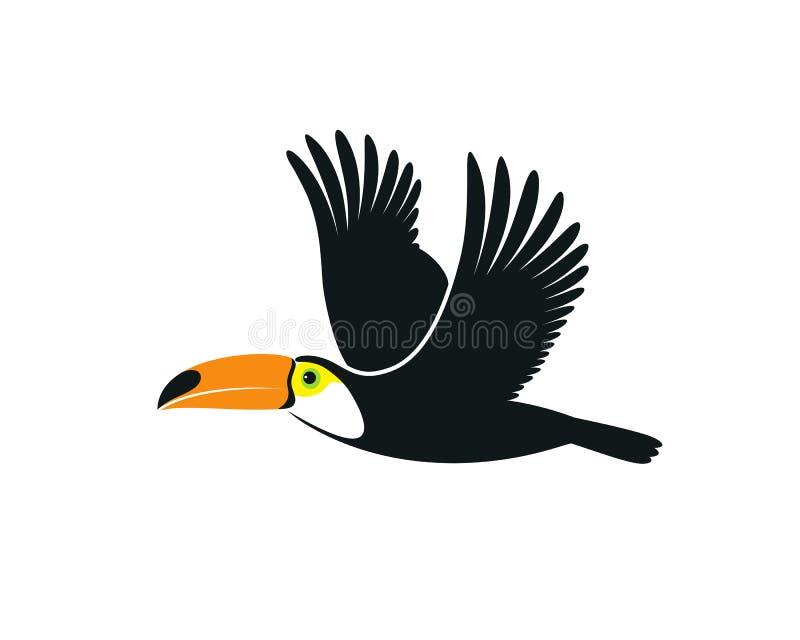 Πέταγμα toucan Απομονωμένος toucan στο άσπρο υπόβαθρο ελεύθερη απεικόνιση δικαιώματος