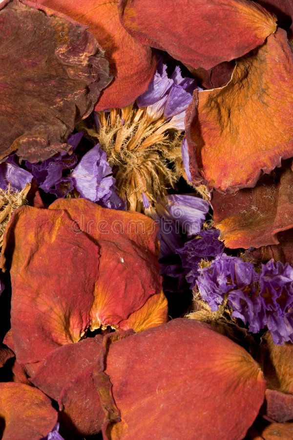 Download πέταλα στοκ εικόνες. εικόνα από ξηρός, χρώματα, φυτό, κονσέρβα - 91846