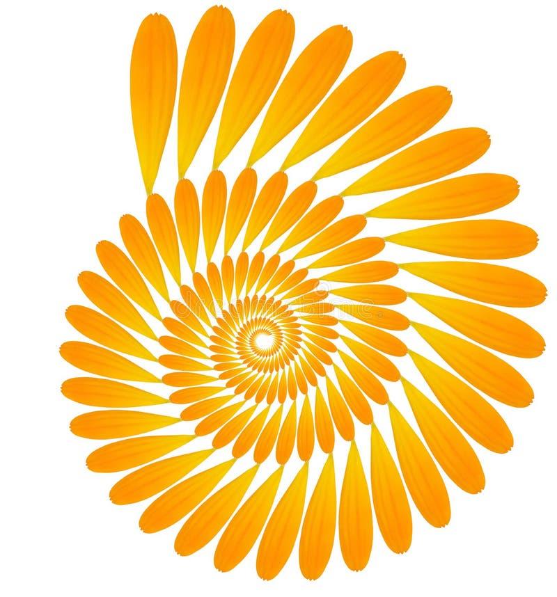 Πέταλα Calendula στοκ φωτογραφία με δικαίωμα ελεύθερης χρήσης