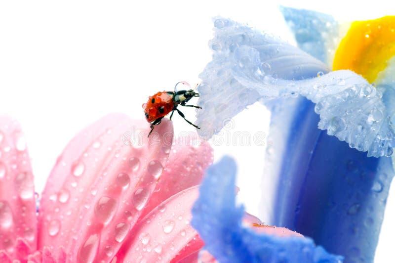 πέταλο λουλουδιών στοκ εικόνες