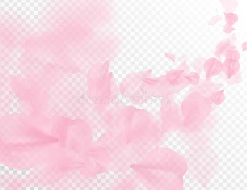 Πέταλο Sakura που πετά το διανυσματικό υπόβαθρο Ρόδινη απεικόνιση κυμάτων πετάλων λουλουδιών που απομονώνεται στο διαφανές λευκό  ελεύθερη απεικόνιση δικαιώματος