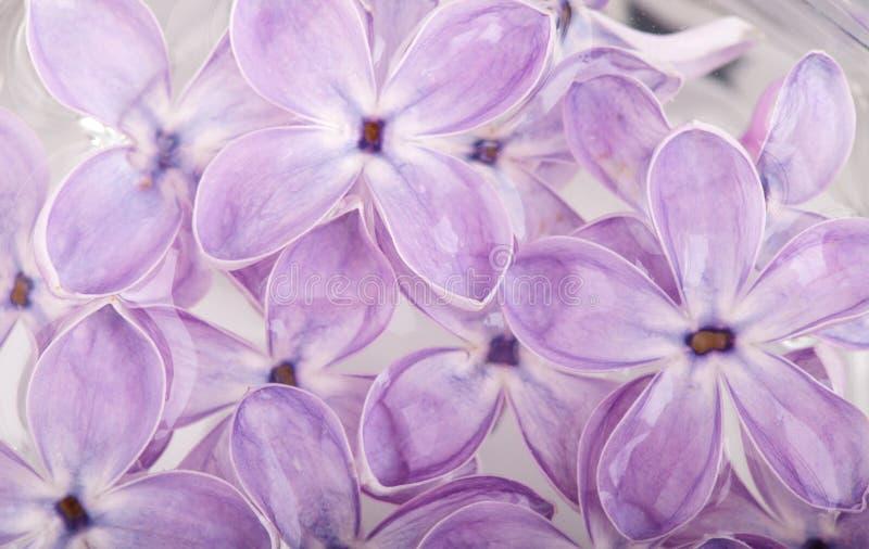 Πέταλα λουλουδιών της πασχαλιάς στο αφηρημένο υπόβαθρο νερού στοκ φωτογραφία