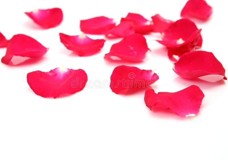 Πέταλα των τριαντάφυλλων στοκ φωτογραφίες με δικαίωμα ελεύθερης χρήσης